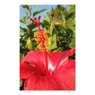 Hibiscus flower personalized flyer