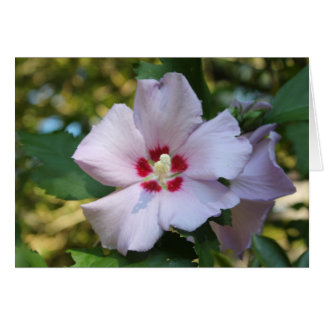 Hibiscus flower note card