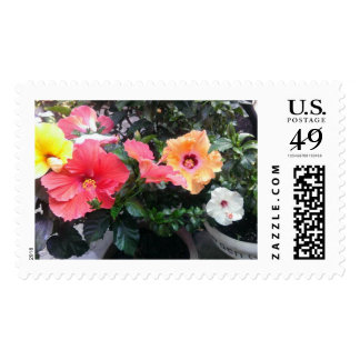 Hibiscus Flower Stamps. Postage Stamp