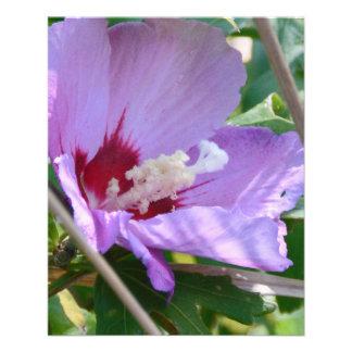 Hibiscus 11.5 Cm X 14 Cm Flyer