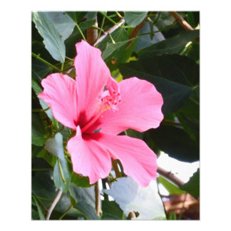 Hibiscus Full Color Flyer