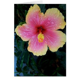 Hibiscus Hawaiian Flower Greeting Card