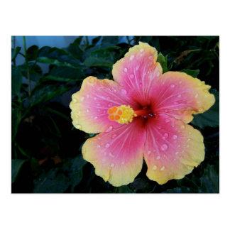 Hibiscus Hawaiian Flower Postcard