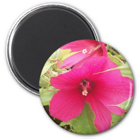 hibiscus Magnet