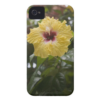 Hibiscus Moorea French Polynesia Blackberry Bold Covers