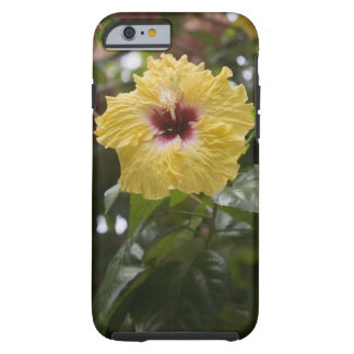 Hibiscus, Moorea, French Polynesia Tough iPhone 6 Case