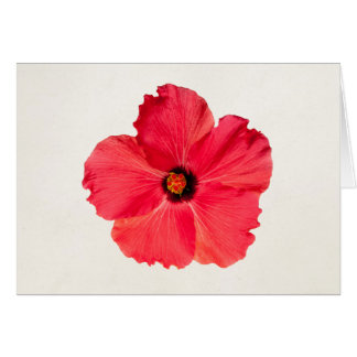 Hibiscus - Personalized Tropical Hot Pink Flower Card