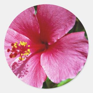 Hibiscus, pink classic round sticker