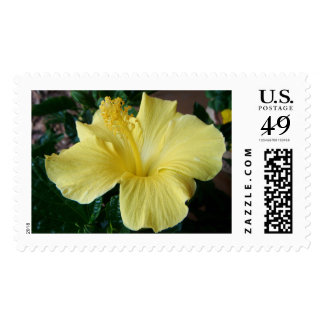 *Hibiscus* Postage Stamp