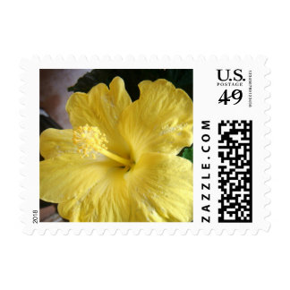 *Hibiscus* Postage Stamps