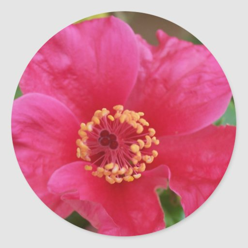 Hibiscus Round Sticker