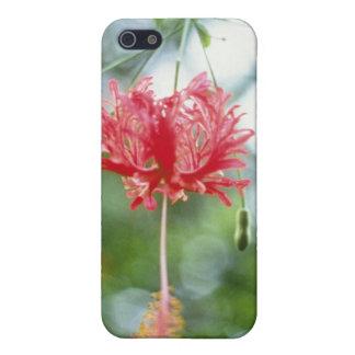 Hibiscus Schizopetalus (Fringed Hibiscus) flowers iPhone 5 Case