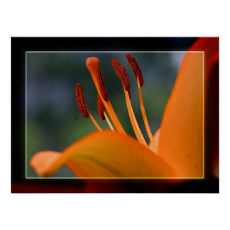 Hibiscus Stamen and Pistil Poster
