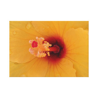 Hibiscus Stretched Canvas