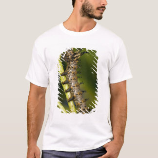 Hickory horned devil caterpillar (Citheronia T-Shirt