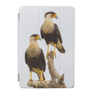 Hidalgo County. Adult Crested Caracara iPad Mini Cover