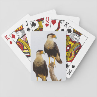 Hidalgo County. Adult Crested Caracara Playing Cards