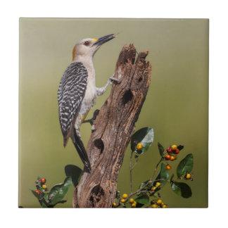 Hidalgo County, Texas. Golden-fronted Woodpecker 1 Tile
