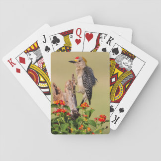 Hidalgo County, Texas. Golden-fronted Woodpecker 2 Playing Cards
