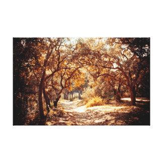Hidden Forest Canvas Prints