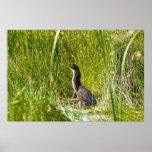 """Hidden Heron"" (Landscape) Print"