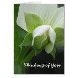 Hidden Peas Customisable Template Note Card