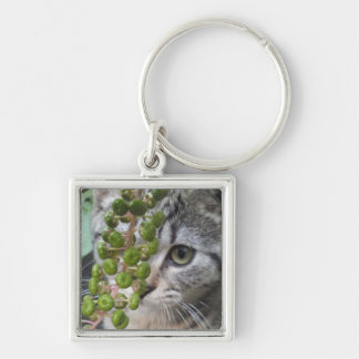 Hiding Kitten Silver-Colored Square Key Ring