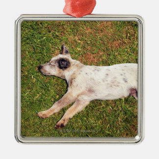 High angle of a dog lying in the grass sleeping. Silver-Colored square decoration