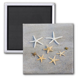 High angle view of a starfish on the beach magnet