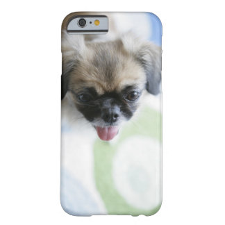 High angle view of an Eskimo Dog Barely There iPhone 6 Case