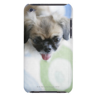 High angle view of an Eskimo Dog iPod Case-Mate Cases