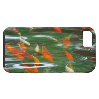 High angle view of koi crap fish in a pond iPhone 5 cover