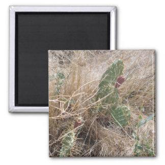 High Desert Cactus Square Magnet