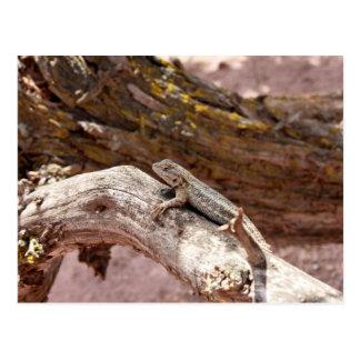 High Desert Lizard on Juniper Postcard