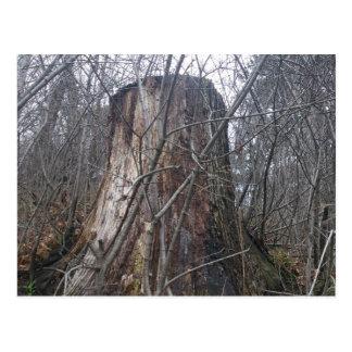High Park Tree Stump Post Card
