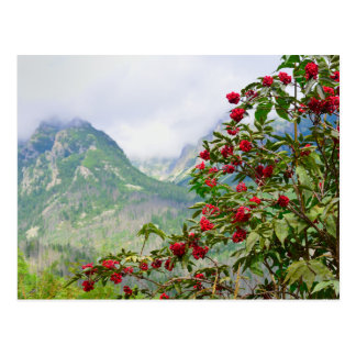 High Tatras Slovakia Postcard