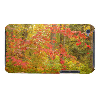 Highbush Cranberry Barely There iPod Case