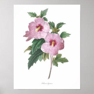 HIGHEST QUALITY Botanical print of Hibiscus
