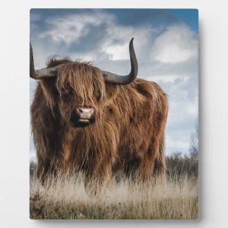 Highland Bull Plaque