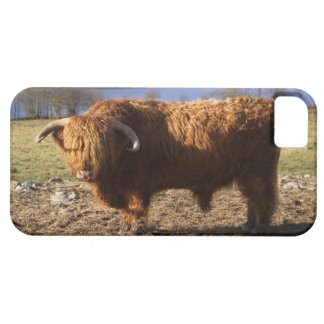 Highland Cattle Bull, Scotland iPhone 5 Cover