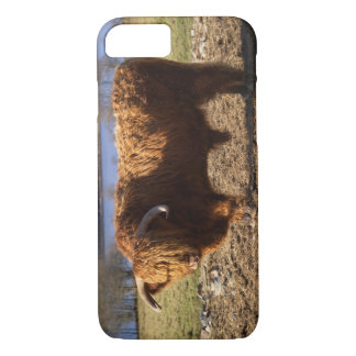 Highland Cattle Bull, Scotland iPhone 8/7 Case