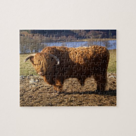 Highland Cattle Bull, Scotland Jigsaw Puzzle