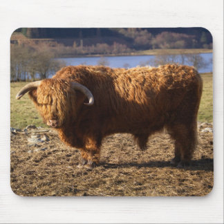 Highland Cattle Bull, Scotland Mouse Pad