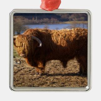 Highland Cattle Bull, Scotland Silver-Colored Square Decoration
