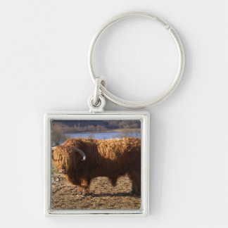 Highland Cattle Bull, Scotland Silver-Colored Square Key Ring