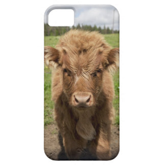 Highland Cattle calf, near Dufftown, iPhone 5 Cover