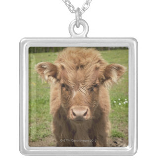 Highland Cattle calf, near Dufftown, Silver Plated Necklace
