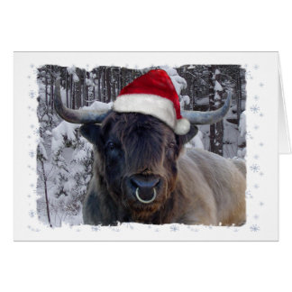Highland Cattle Christmas Card