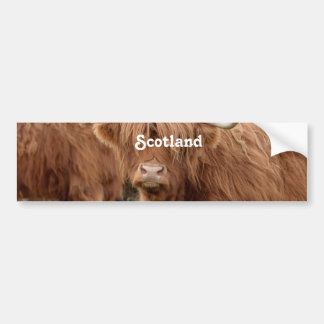 Highland Cow Bumper Sticker