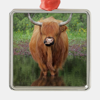 Highland cow christmas ornament